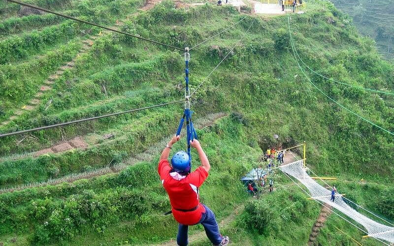Genting flying fox